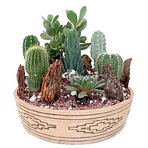 Ассорти из кактусов
