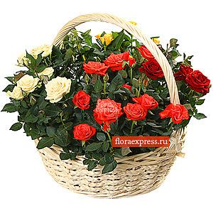 Вальс роз