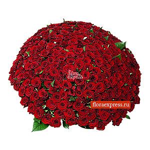 Рубиновая роскошь (301 роза)