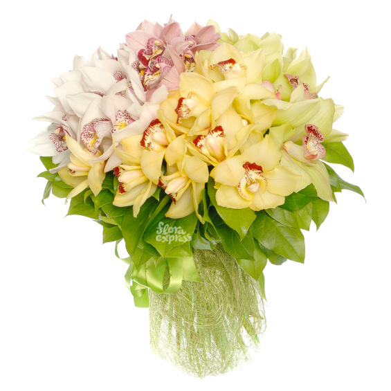 Таинственные орхидеи