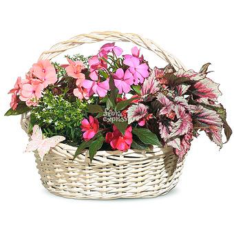 Букет Корзина «Сердечное поздравление»