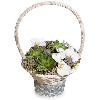 Букет Корзина «Каменный цветок»