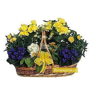 Композиция из цветущих растений