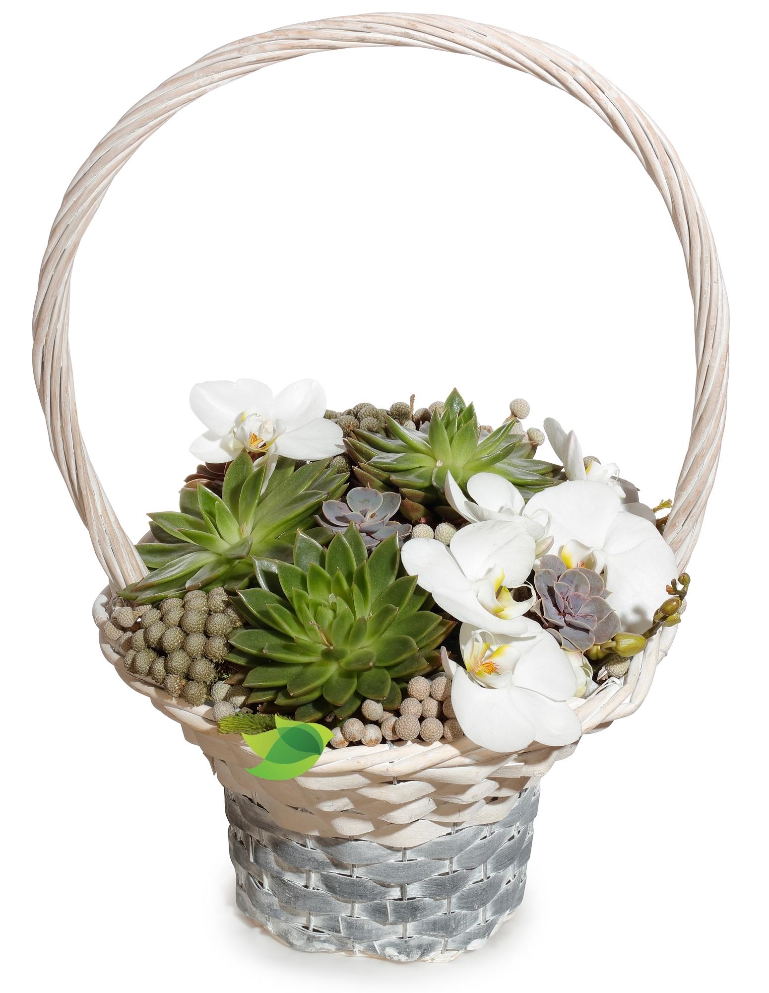 Фото букета: Корзина с суккулентами и орхидеей